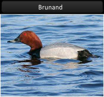 Brunand