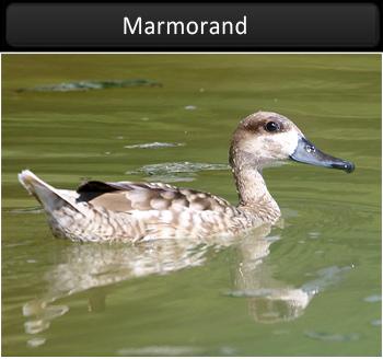 Marmorand