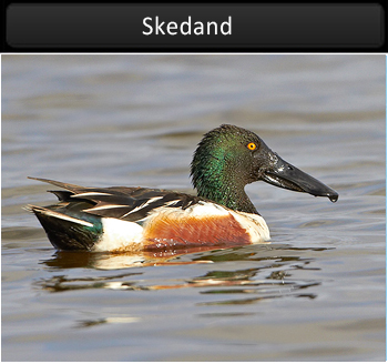 Skedand