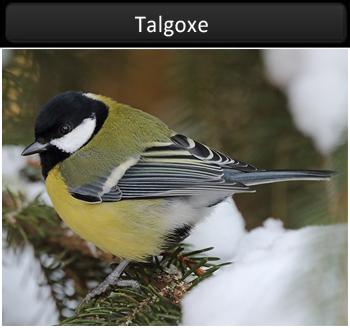Talgoxe