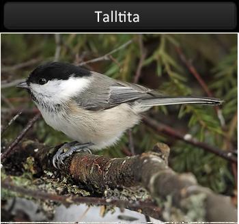 Talltia