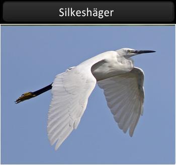 Silkeshäger