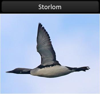 Storlom